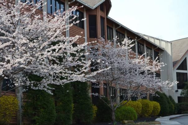 Carson Springs in Springtime